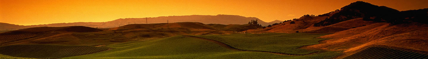 Santa Rosa, California vineyard at sunset